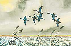 #514 ~ Taylor - Untitled - Six Pintails Taking Flight